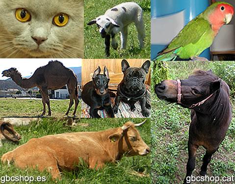 GBC SHOP Animales
